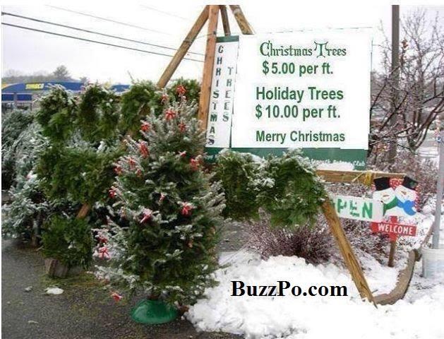 ChristmasVsHolodayTrees